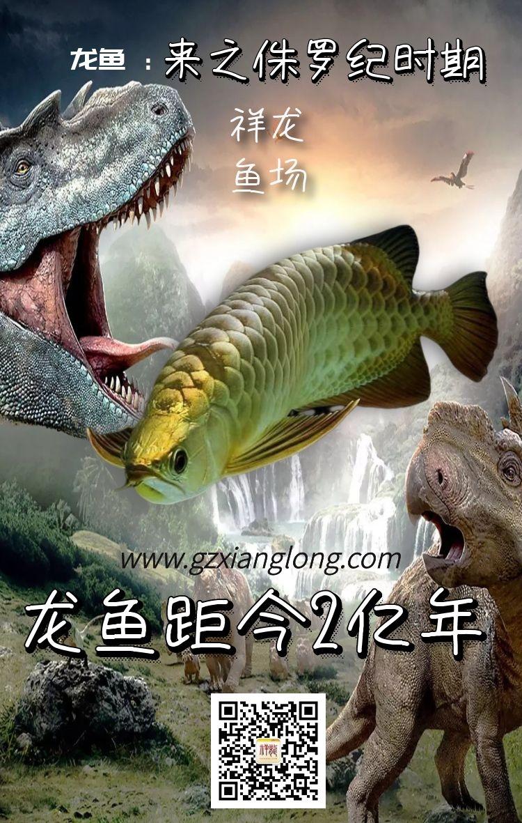 绵阳祥龙水族馆恭贺本市鱼友新春快乐祝福2021