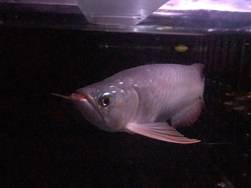 我与爱鱼的美好时光之拉老婆进坑